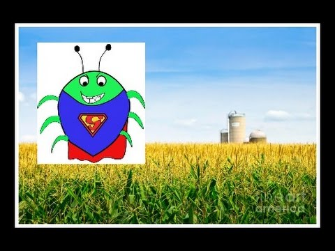 Food Supply Threatened By GMO Super Weeds!