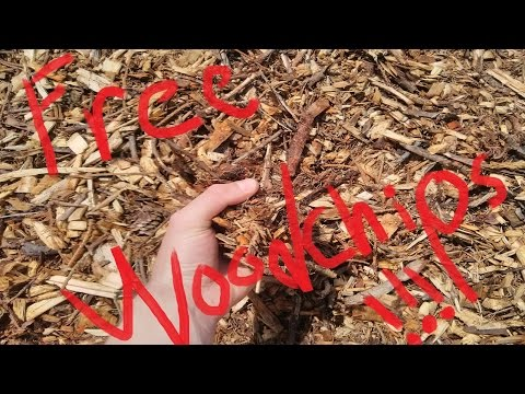 How to get FREE wood chips (for your garden!)