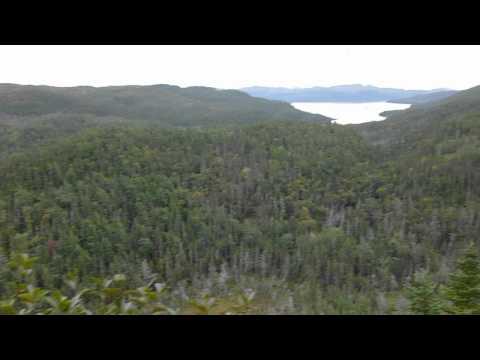 Down Rockie Brook Bay East moose hunting 2012