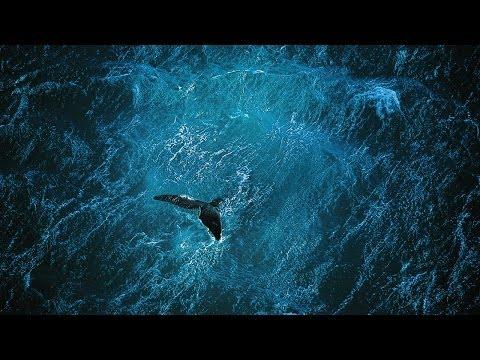 Planet Ocean [UK]- the film by Yann Arthus-Bertrand