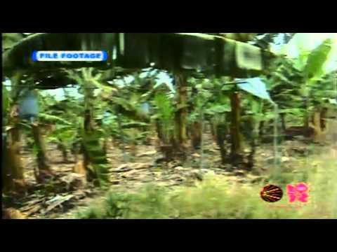 CVM TV - NEWS WATCH (JAMAICA) (JULY 22ND 2012) (PART 1)