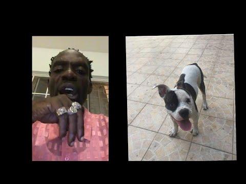 Ninja Man American Bulldog Got Stolen By Thieves ? $50,000 Reward If Found