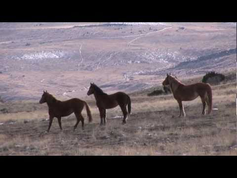 Saving The Mustangs-North America's Horse on the Brink