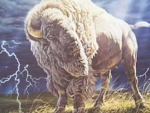 White Buffalo by Cusco