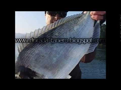 pescadoradatanero 8 ª pesca dorada peche dorade fishing orata.wmv