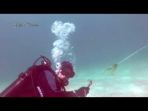 Muskie Attacks Scuba Diver