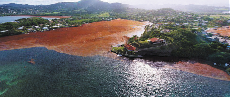 Along the Coast: Sargassum surge viewed as disaster in