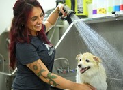 Free Dog Grooming for Doggy Foster Families