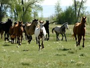 """""""Through the Eyes of the Horse"""" 5th Annual Literature & Landscape of the Horse Retreat"""