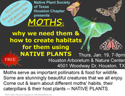 MOTHS: Why we need them and how to garden for them using NATIVE PLANTS