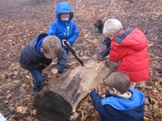 Young Explorers (ages 4-5) Nature Class Starts