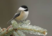 Beginner Birding at Riverside Park