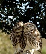 Owl You Need is Love...and Birds!