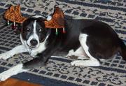 Ben at Christmas 2006