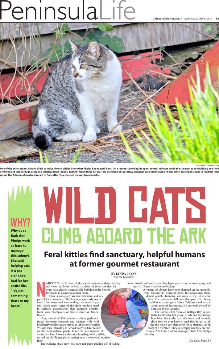 wild-cats-1