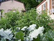 Garden 2007