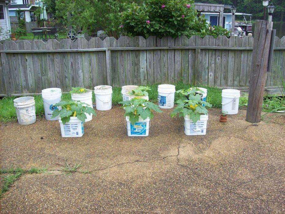 Bucket Garden