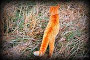Tabby Cat Exploring