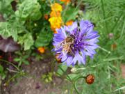 bees everywhere!