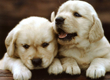Puppy Labs!
