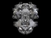 skull growth