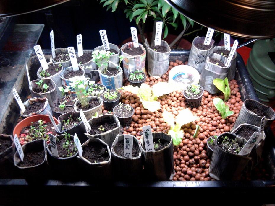 Paper Pots/Sprouts