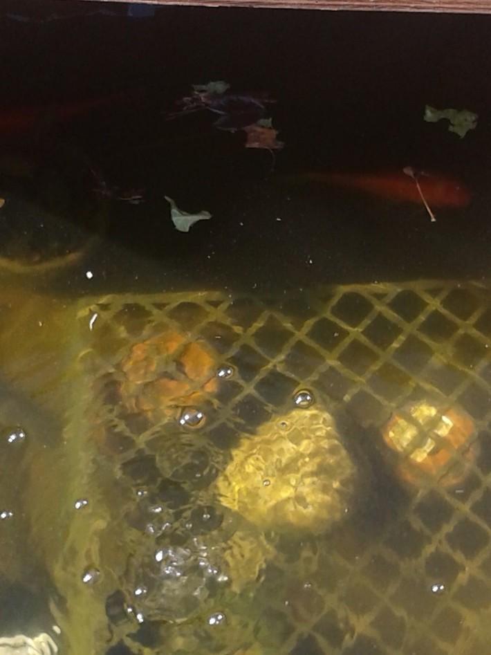 Arlanza community garden pond update..