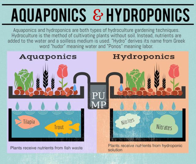hydroponic-and-aquaponic