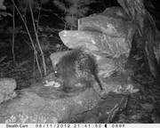Newest Trail Cam pictures