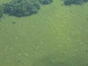 Canje - Arwak mounds