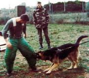 19_Placement d'un chien jambe