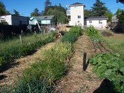 Veggie Garden Summer 2009