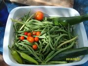 2010.0901 today's harvest