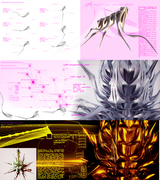 metamorphogenesis