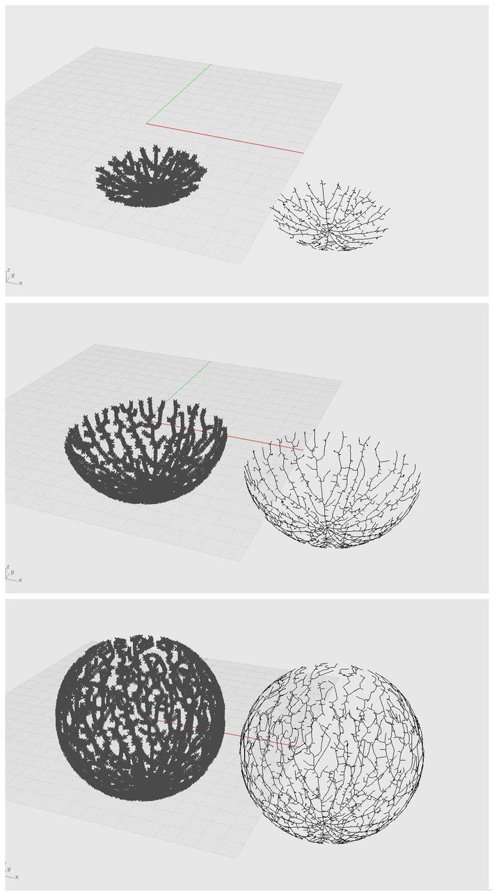 3D Venation Growth