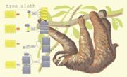 tree_sloth_early_bird-01