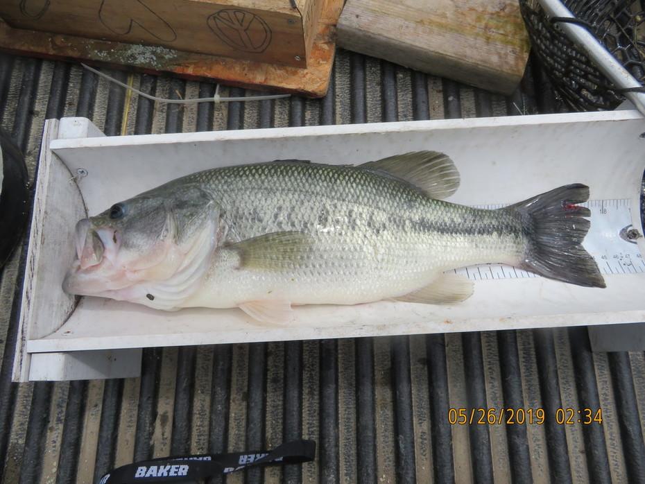 3lb bass b