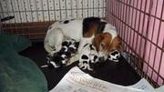 pups new 002