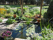 My small pond