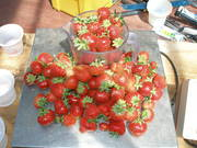 aquaponic strawberries