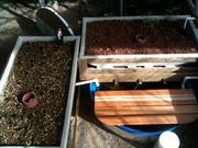 Colorado Aquaponics Bench System