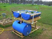 Barrel Aquaponics Spring 2011 - 1