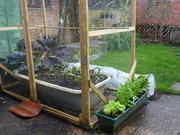 My tiny garden English garden.