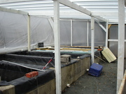 View inside greenhouse lean-to