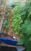 2013-05-growbed4