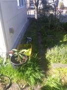 Berkeley Aquaponic Garden