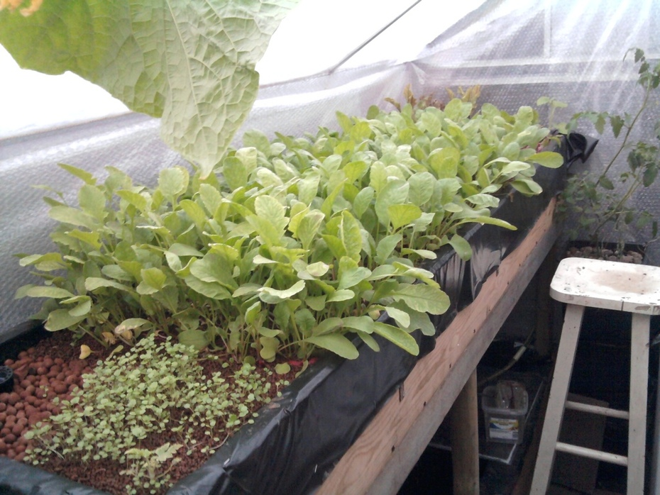 Experimental greenhouse summer 2015