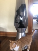 Cat and Colossus