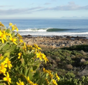 Beautiful lefts of the Cape