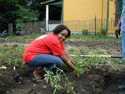 Garden Swap - Got a plot? Want a plot?